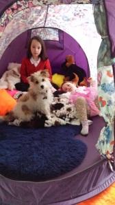 kids dog tent